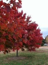 Red tree 8