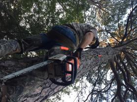 treewrangling